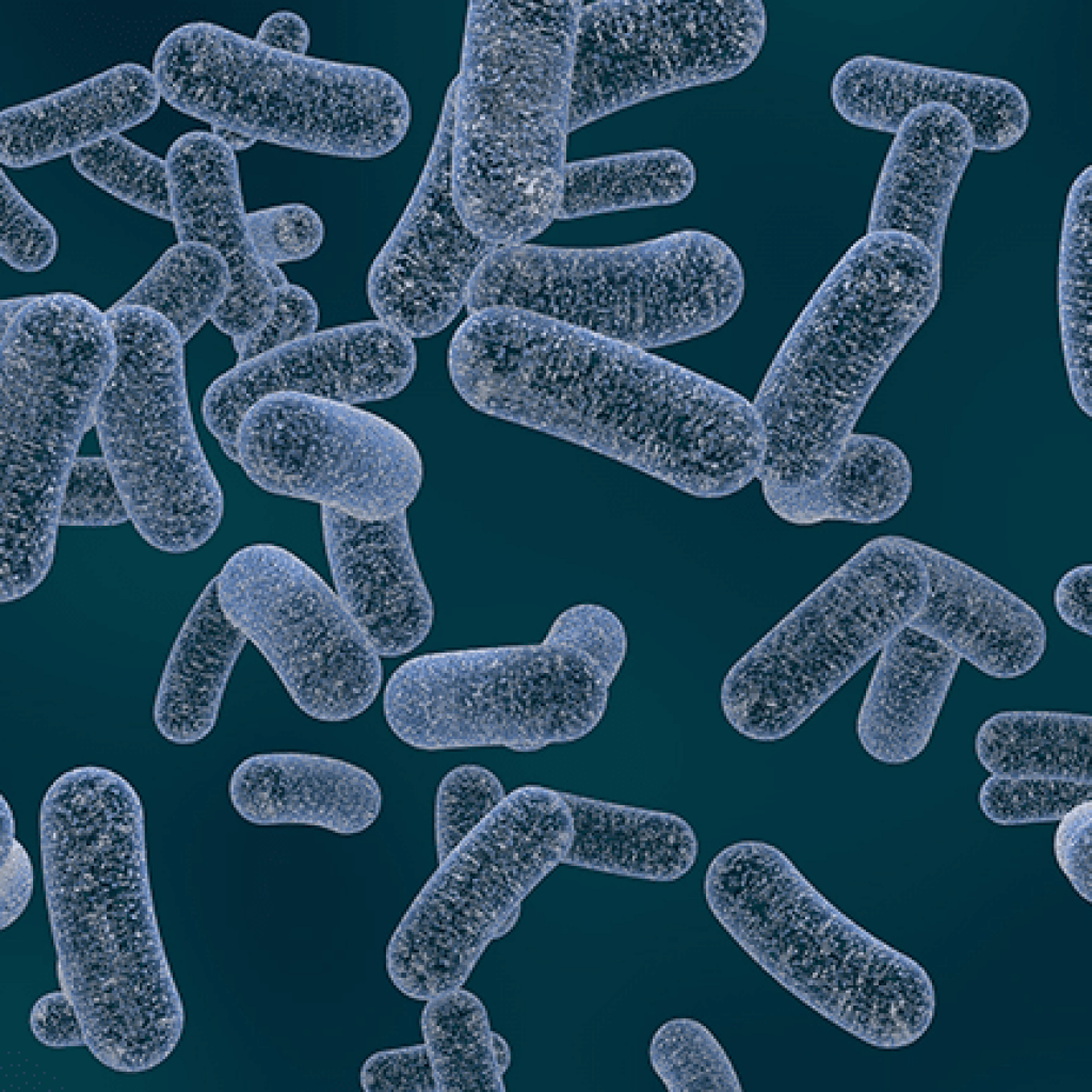 Klebsiella bacteria