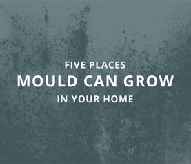 Five places mould can grow in your home [Infographic]