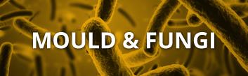 mold-fungi