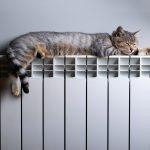 Cat + Radiator